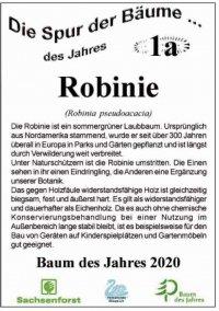 Informationstafel zur Robinie